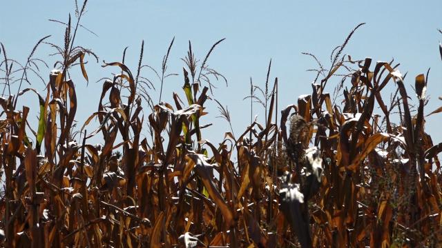 Prizemni mraz u Šumadiji nije naneo značajnije štete