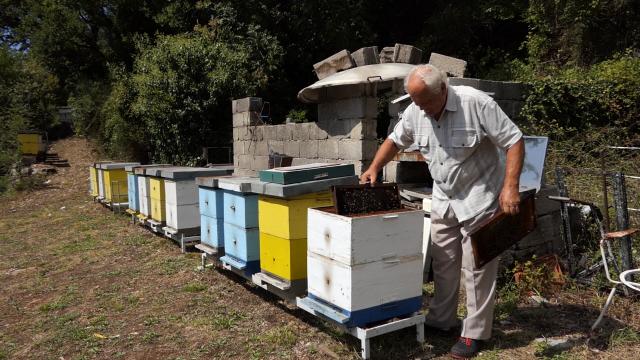 Formiranje novog pčelinjeg društva