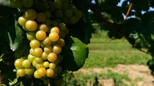 U vinski turizam uloženo preko 10 miliona