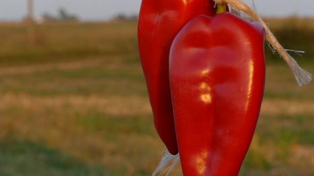 Ponuda paprike značajno manja od tražnje