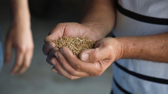 Za uspešnu proizvodnju pšenice