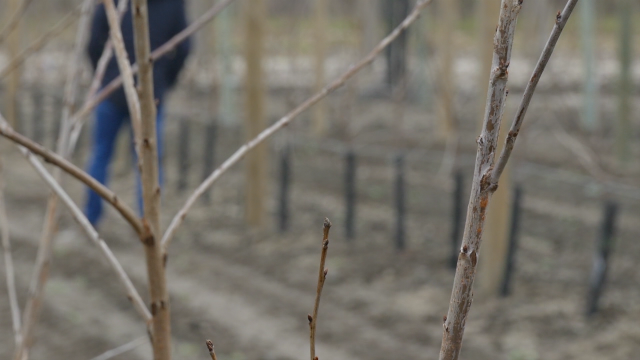 15 godina dele voćne sadnice