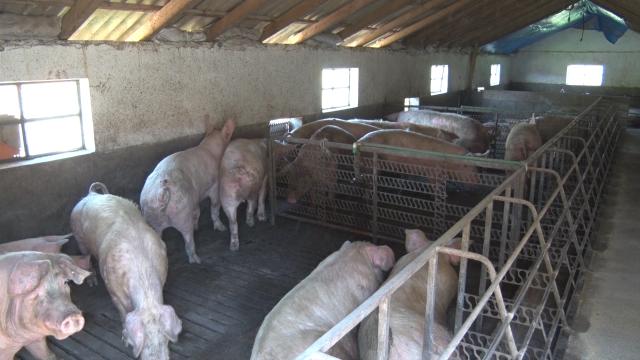 Praznična potrošnja uticaće na rast cena svinjetine