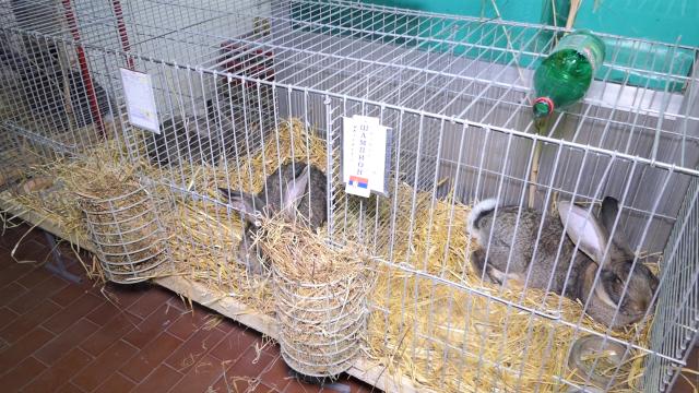 Međugradska izložba sitnih životinja u Kuli