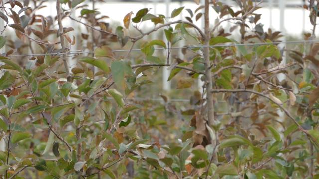 Jesenje prskanje - obavezna mera zaštite