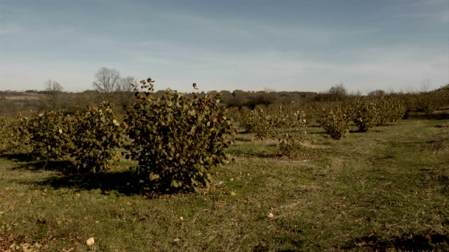Klimatski i zemljišni uslovi idealni za lesku