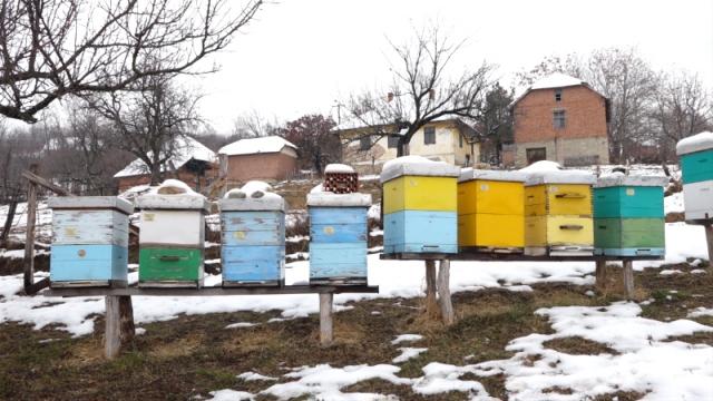 Pčelarenje kao životni izbor