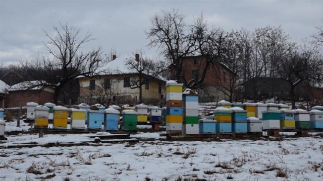 Zaštita i prihrana pčela