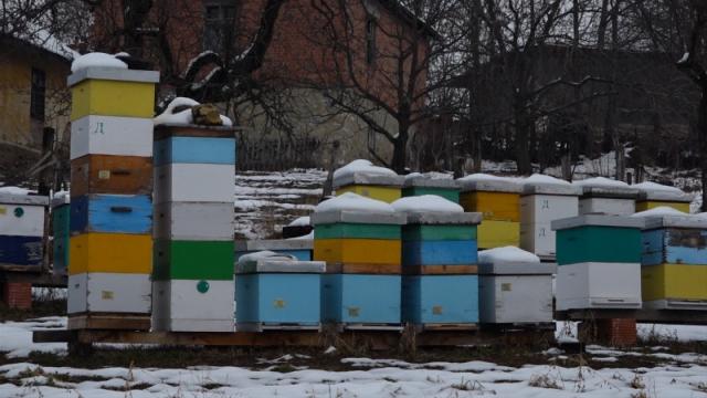 Pčelarstvo kao porodična tradicija