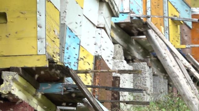 Izvoz pčelinjeg otrova