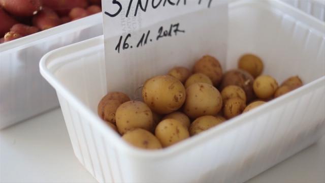 U Srbiji nema ustanove koja proizvodi seme krompira