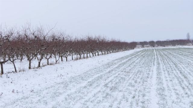 Sneg prija višegodišnjim zasadima