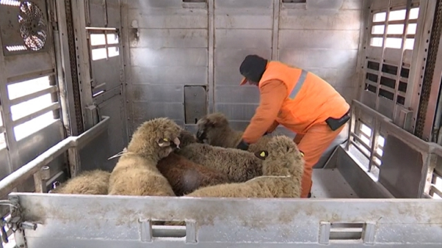 Efikasno izmeštanje i zbrinjavanje stoke