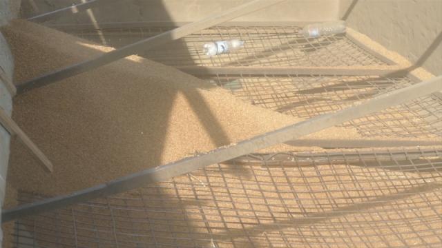Najviša cena pšenice u poslednje četiri godine