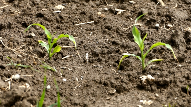 Nov herbicid za efikasno suzbijanje korova