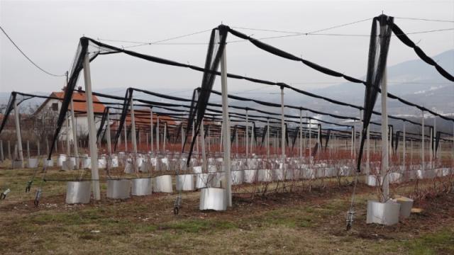 Niču plantaže uz pomoć opštine