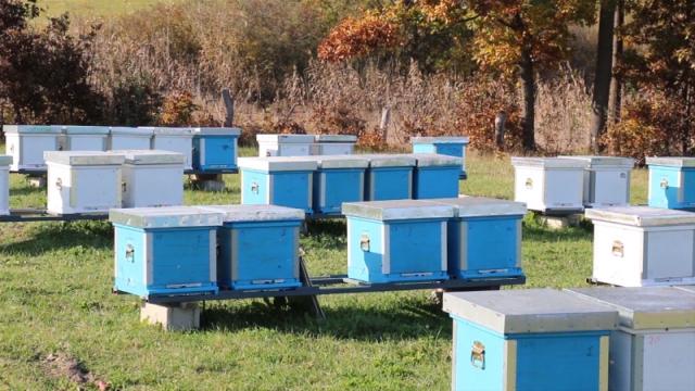 Nedozvoljeni tretmani semena ugrožavaju pčele