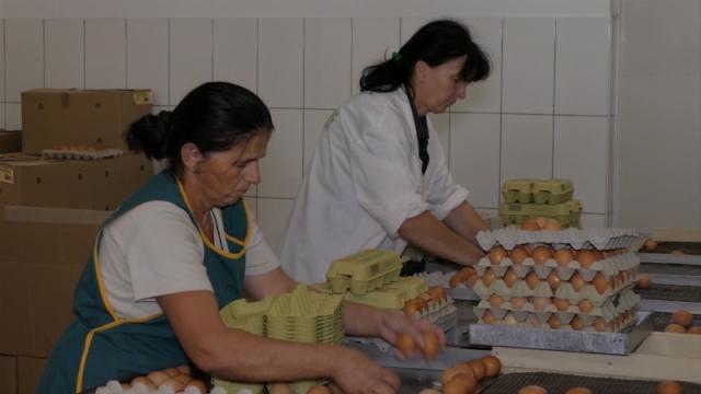 Oznaka garantuje poreklo i kvaliteta jaja