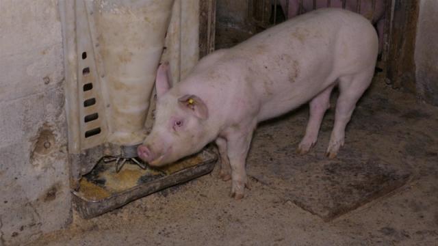 Važno da farmeri sprovode propisane biosigurnosne mere