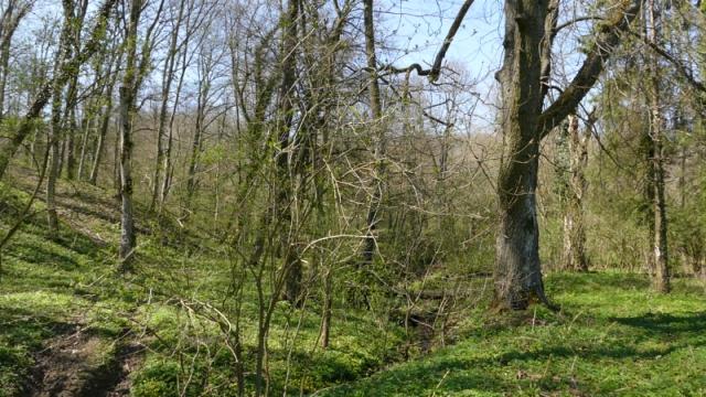 Vojvodina - jedan od evropskih regiona sa najmanje šuma