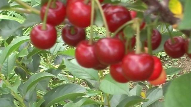 Promocija pozitivnih trendova u proizvodnji voća