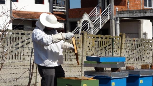 Pčele spremne za novu sezonu