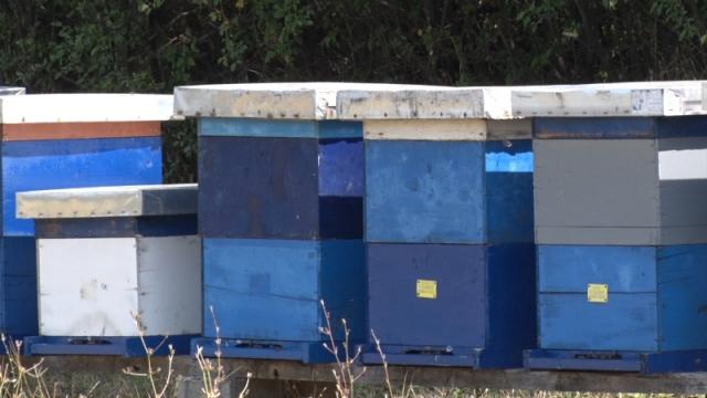 Kako prepoznati nozemozu kod pčela?