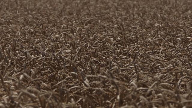 Turbulencije na tržištu žitarica