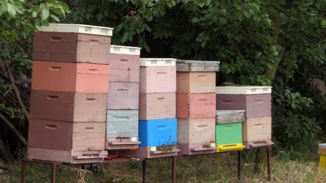 Unapređivanje pčelarske proizvodnje  u Vojvodini