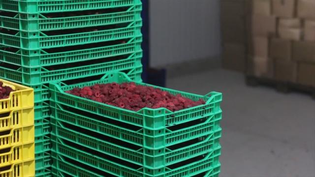 Radna grupa za malinu se usaglasila oko proizvođačke cene
