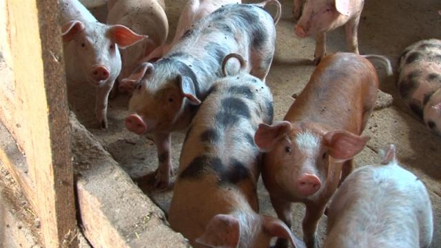 Traže za 10% niži PDV na sojinu sačmu i sojinu pogaču