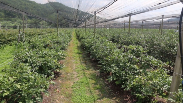Podrška i promocija organske proizvodnje u Srbiji