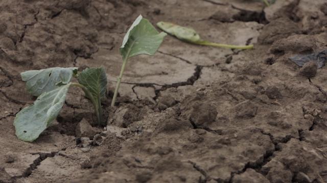 Ugrožena plodnost zemljišta