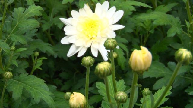 Proizvodnja cveća obezbeđuje egzistenciju na selu