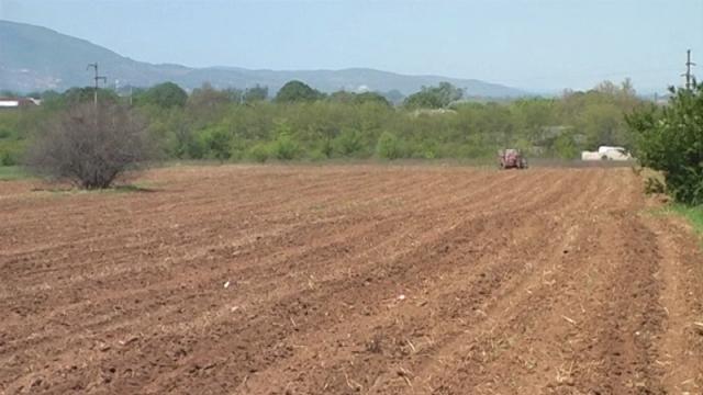 Dobra priprema neophodna pred setvu kukuruza
