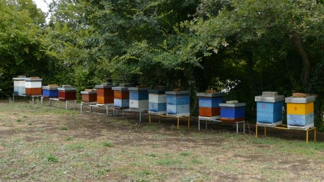 Tretmani ugrožavaju pčele tokom dve glavne paše