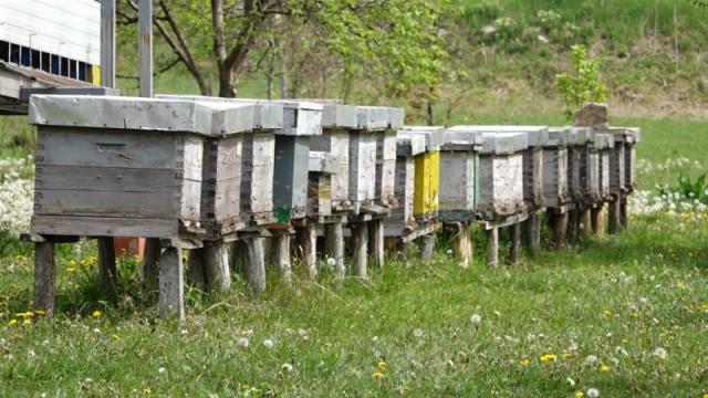 Pčele spremne, čeka se bagrem