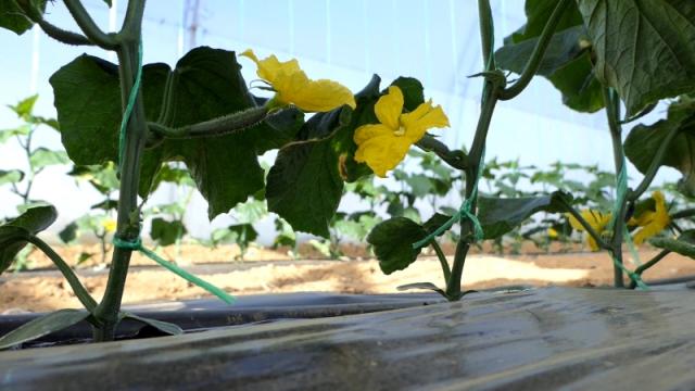 Fitofert tehnologija  + Agroservis = USPEH