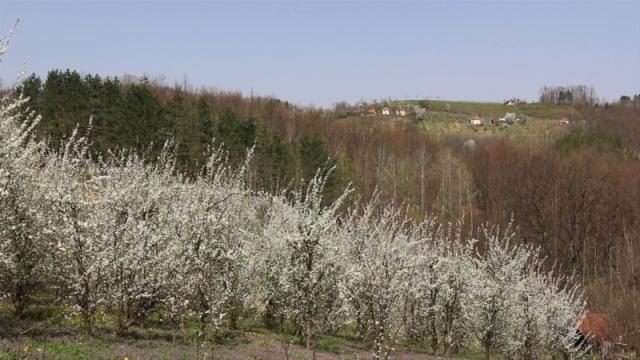 Sprečiti trovanja pčela zbog prskanja voća