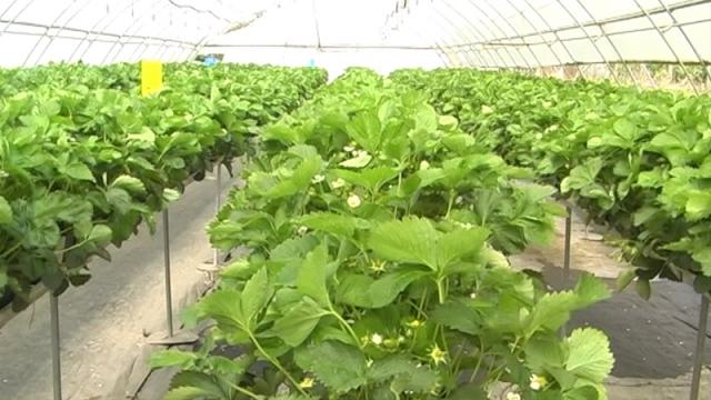 Blagovremenom zaštitom  do kvalitetnog ploda
