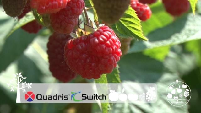 Quadris i Switch obezbedjuju rod maline