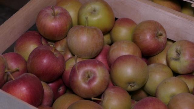 Za Rusiju ide samo jabuka ekstra kvaliteta