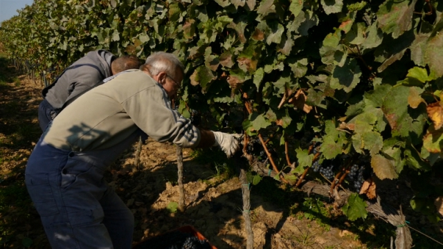 Penzioneri mogu da rade sezonske poslove