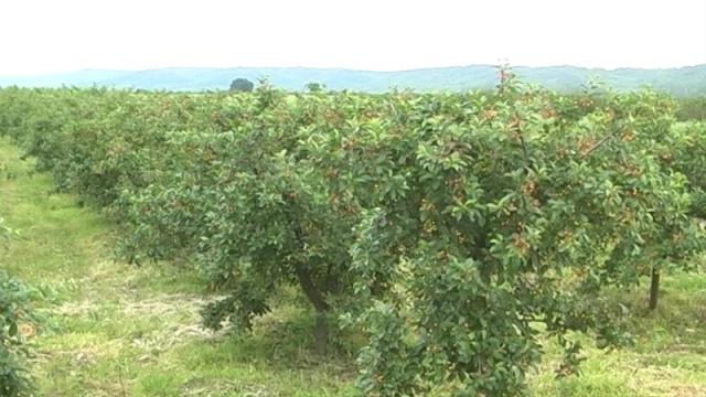 Obavezne mere zaštite, tretiranja i prihrane voćaka