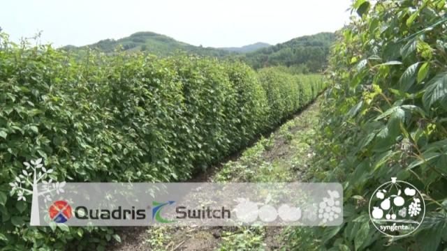 Quadris i Switch za sigurnost u proizvodnji maline