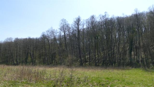 Sprečiti nelegalnu seču stabala