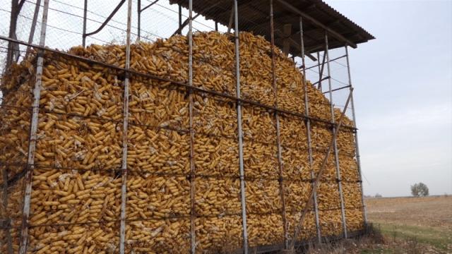 Kukuruz u fokusu trgovanja