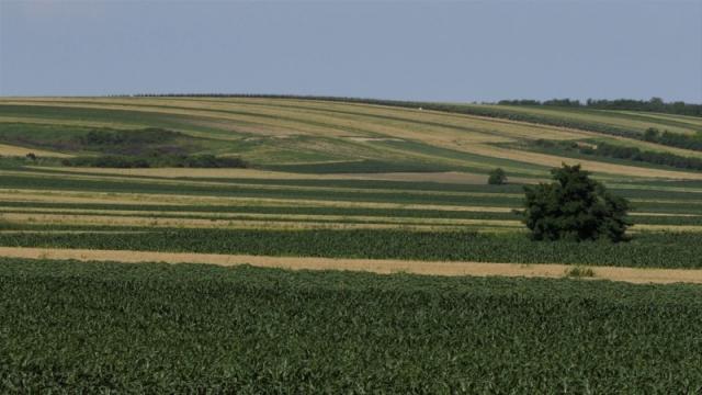 Manjak kvalitetnog zrna podiže cenu pšenice