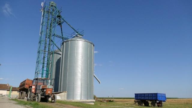 Ministar očekuje izvoz milion tona pšenice