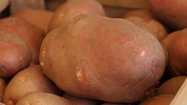 Krompir sve jeftiniji